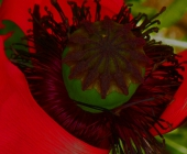 ingrid_homepage_2014_06